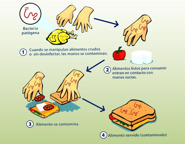 Qu es la contaminaci n cruzada food safety certification consulting services puerto rico - Fuentes de contaminacion de los alimentos ...