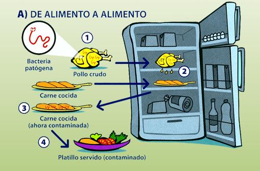 Qu es la contaminaci n cruzada food safety for La cocina de los alimentos pdf